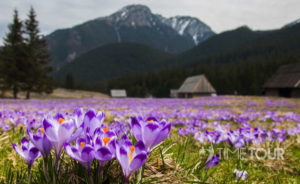Wycieczka szkolna do Zakopanego i w Tatry - Dolina Chochołowska